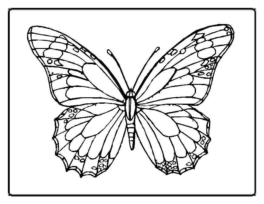 free printable monarch butterfly coloring pages