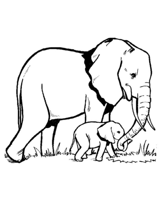 elephant and baby coloring page