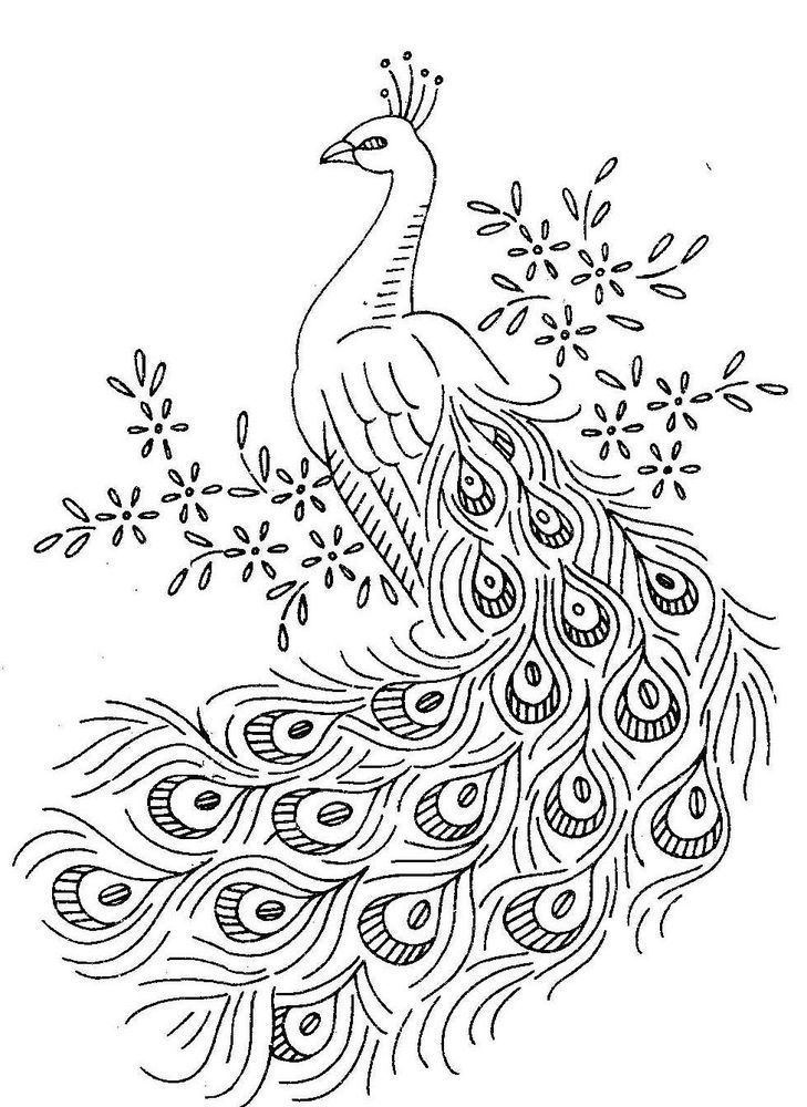 Birds Coloring Pages to Knowing the Kind of Birds Name - Coloring ...