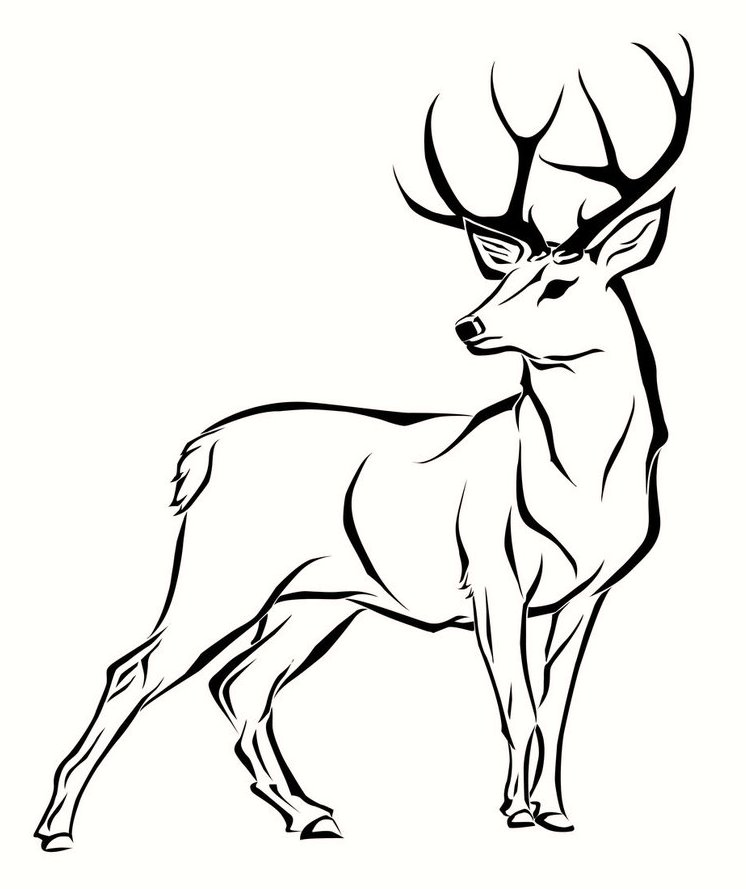 deer-coloring-pages-03