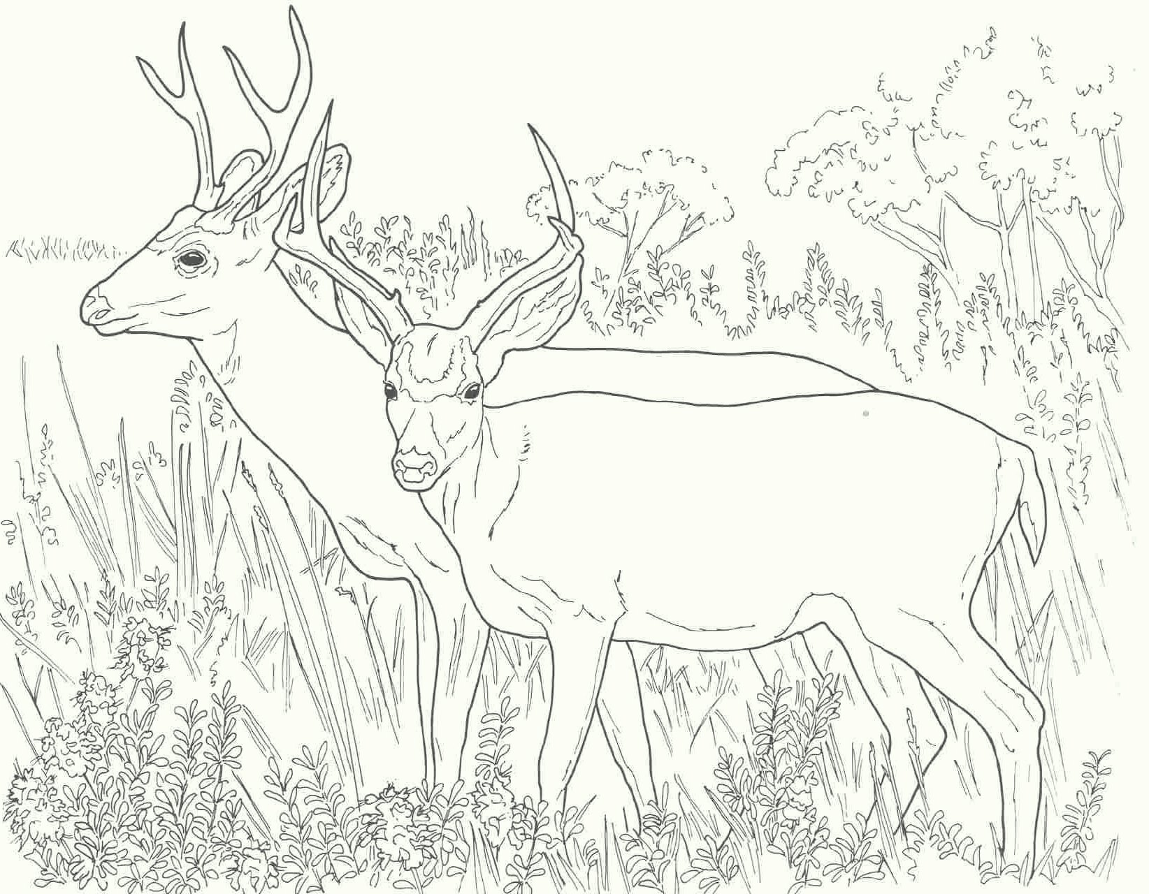 deer-coloring-pages-05