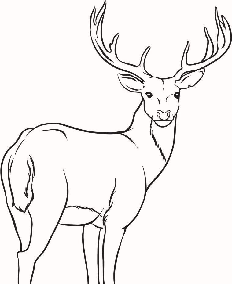 deer-coloring-pages