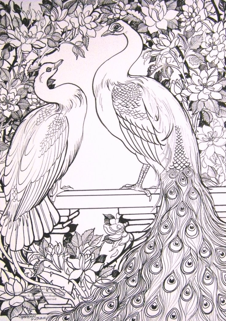 white_peafowl_coloring_pages