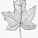 Pattern-maple-leaf-zentangle