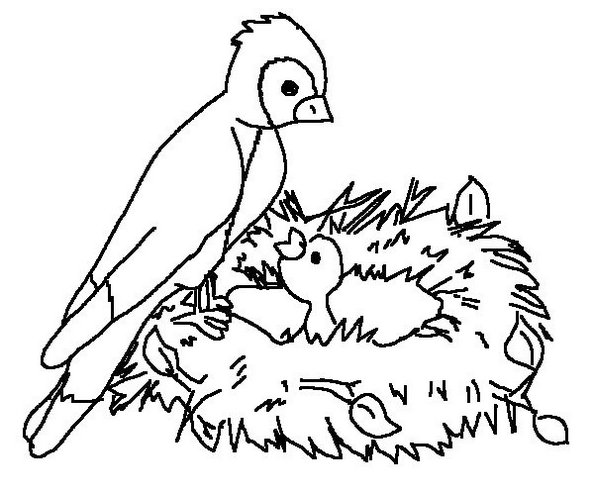 activities-of-a-bird-in-nest-coloring-page