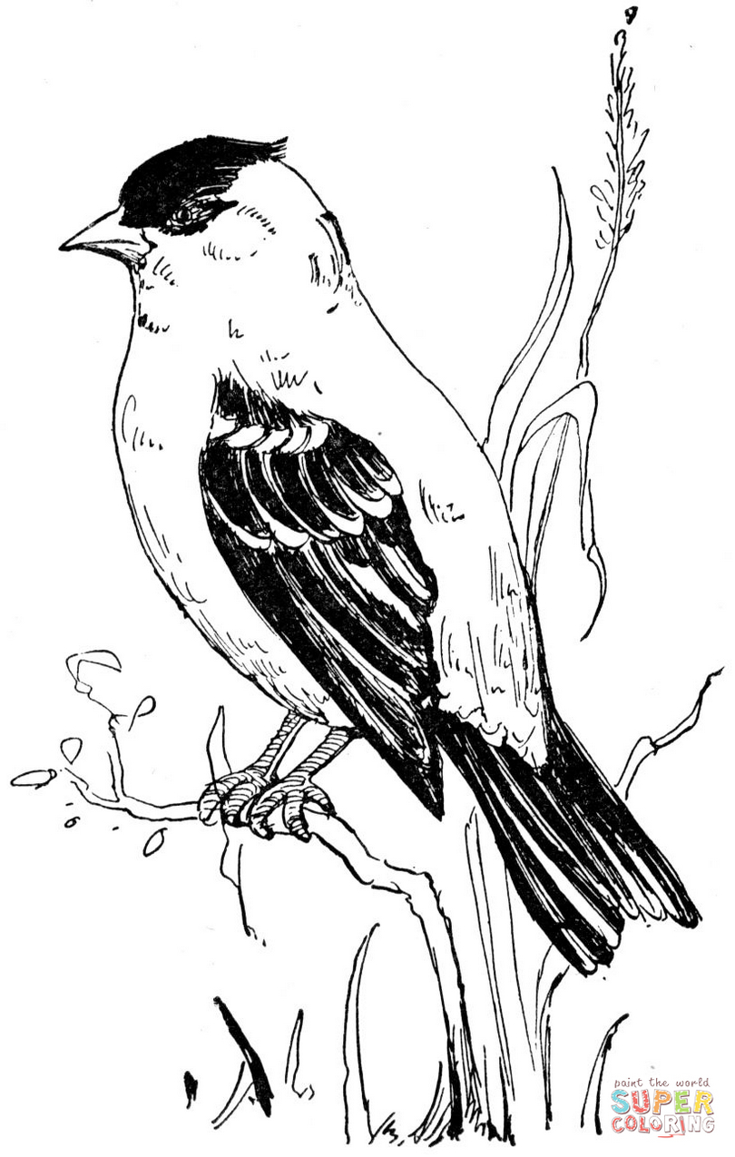 american-goldfinch-coloring-page-to-print