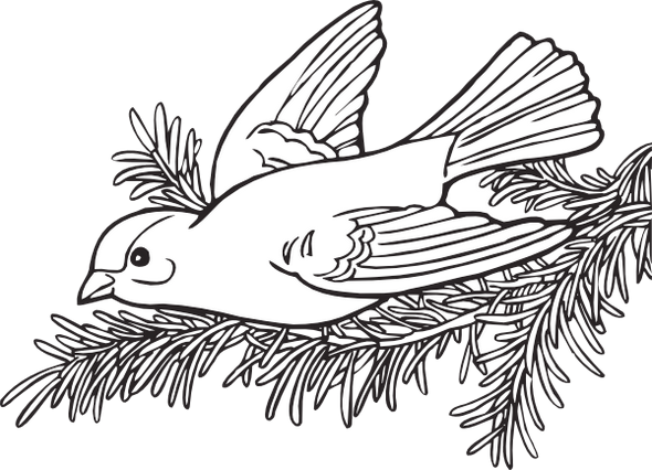 american-willow-goldfinch-coloring-page-printable