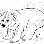 bear-winter-animal-print-out-drawing