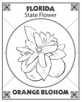florida-state-flower-coloring-page-symbol