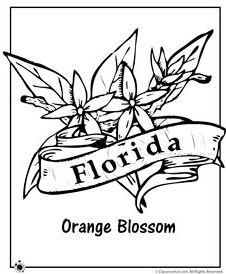 florida-state-symbols-coloring-pages-orange-blossoms