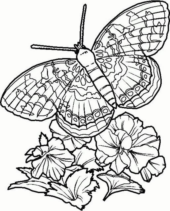 intricate-butterfly-and-flower-coloring-page