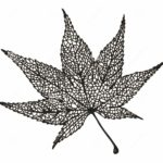 japan-maple-leaf-zentangle-drawing