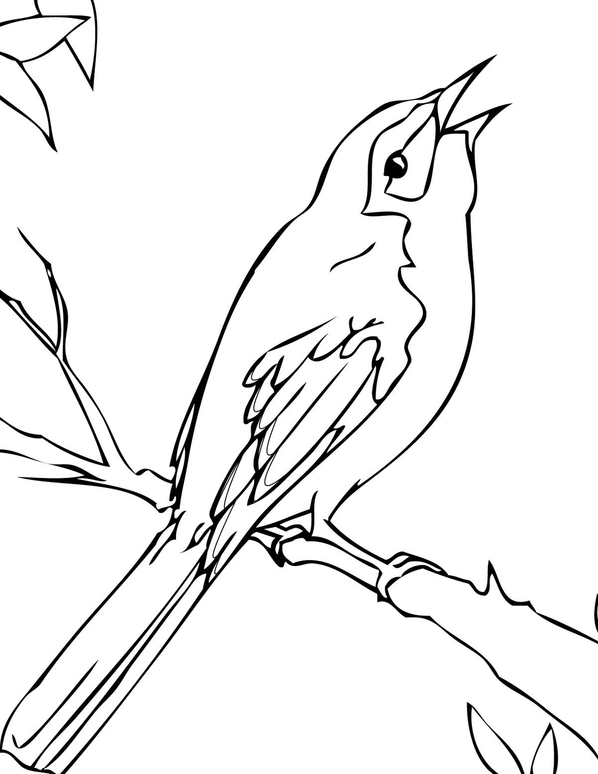 mockingbird-coloring-page-to-print