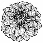 zentangle-dahlia-flower-coloring-page