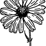 zentangle-daisy-flower-coloring-page