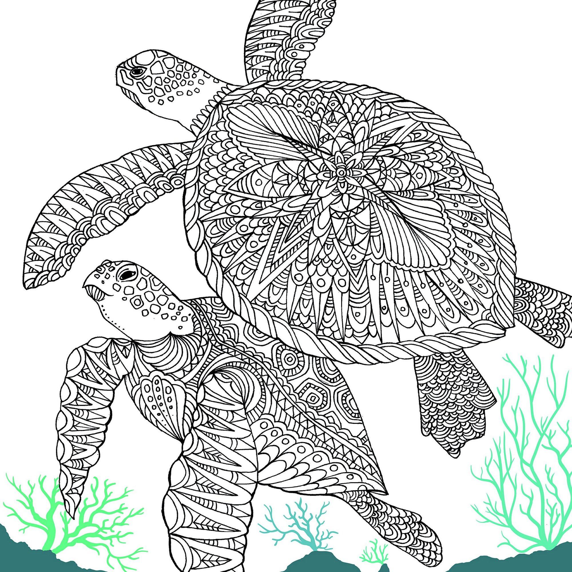 The-Aquarium-Marine-Portraits-Turtle