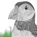 The-Aviary-Bird-Portraits-coloring-book-puffins