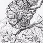 colour-my-dreams-coloring-book-chameleon