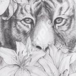 colour-my-dreams-coloring-book-tiger