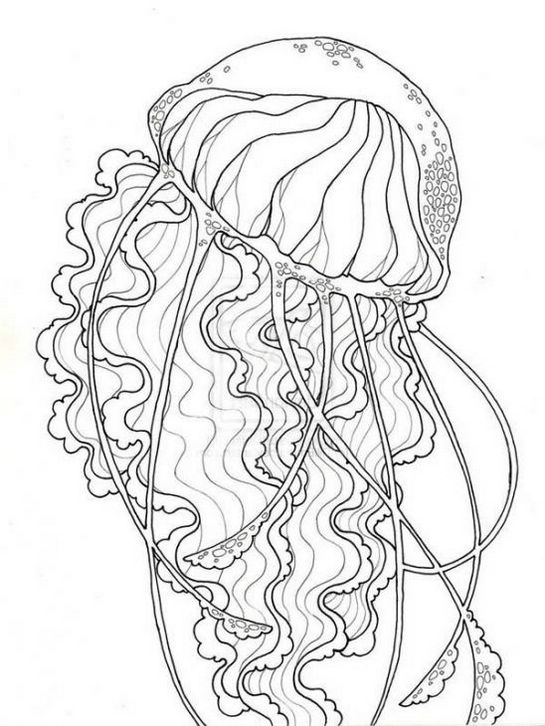 jellyfish-coloring-pages-for-adults