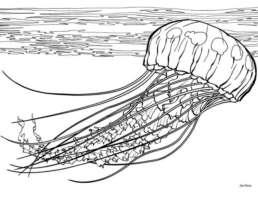 jellyfish-coloring-pages-printable