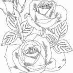 mandala_rose_flower_coloring_Pages