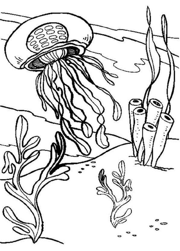 realistic-jellyfish-coloring-book