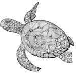 turtle-manda-print-out-drawing