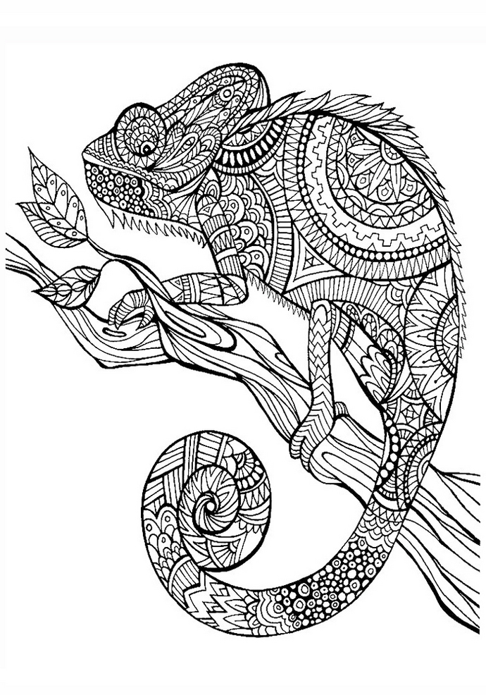 Animal Mandala Chameleon Coloring Pages As Anti Stress