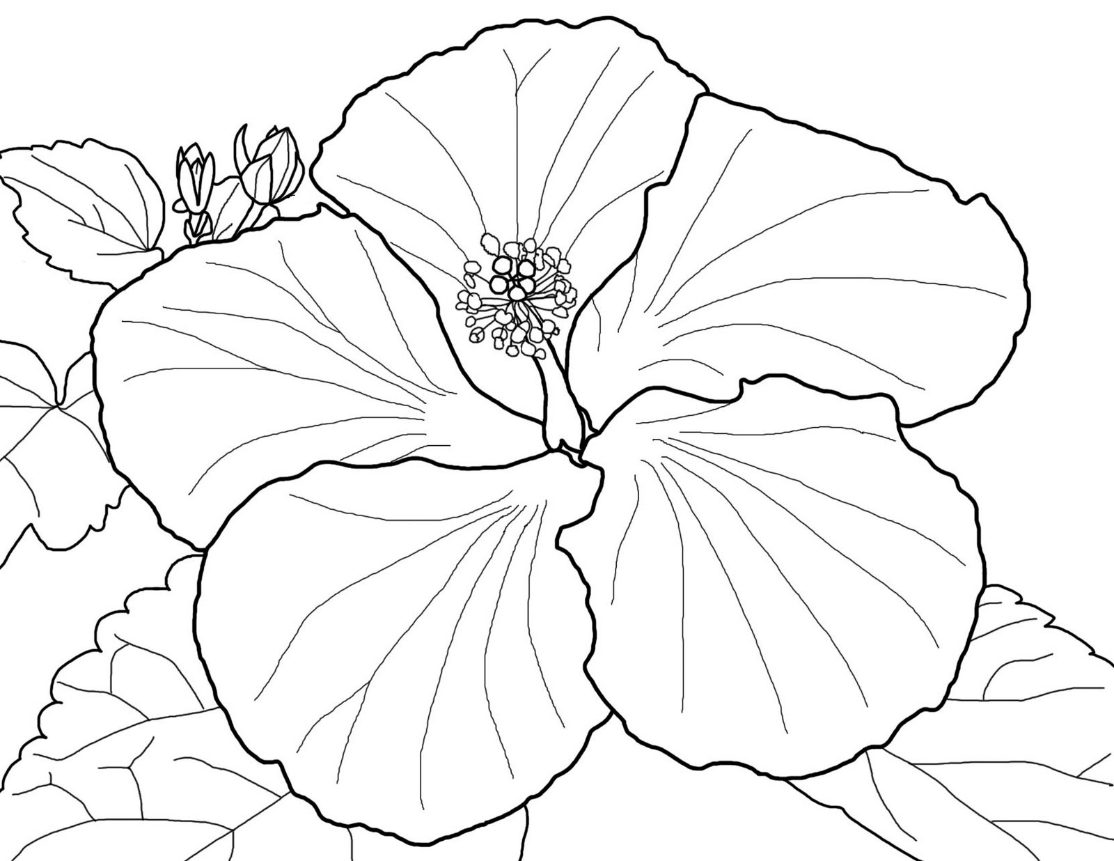 Hibiscus Floral Coloring Sheet For Girls