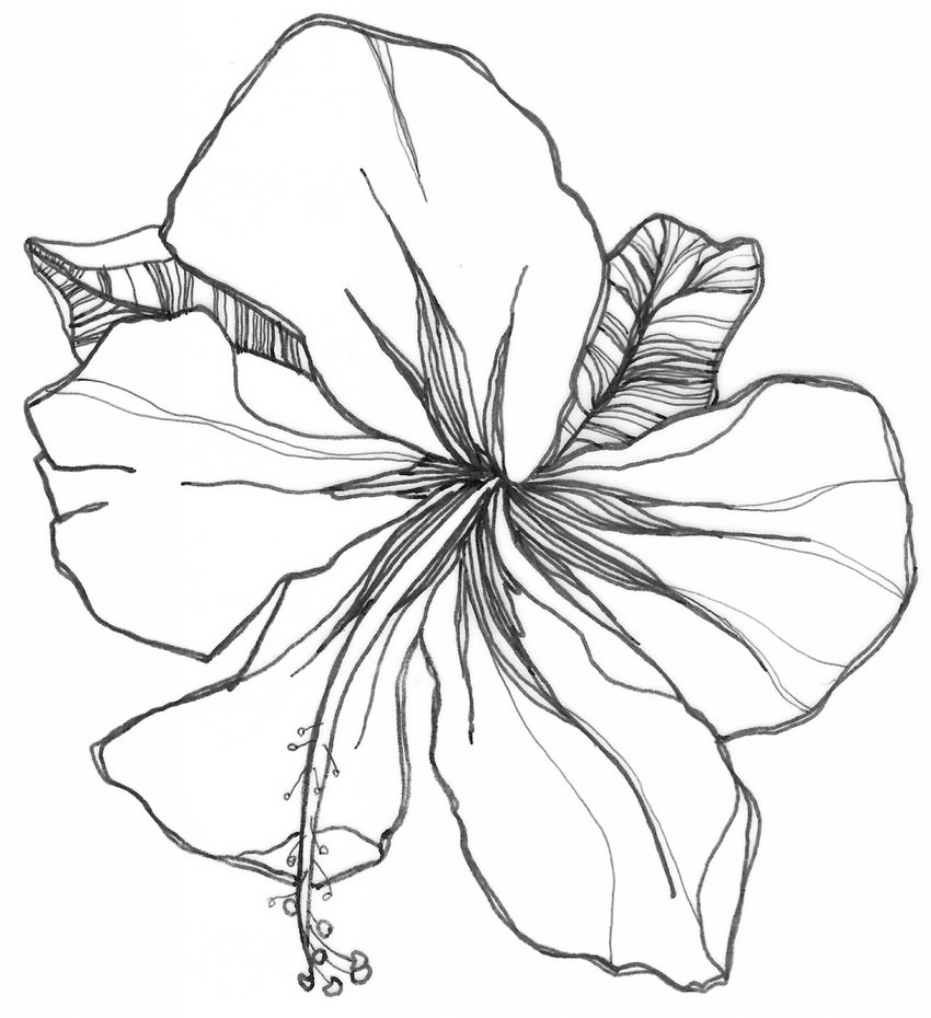 Hibiscus Flower Coloring Books To Print