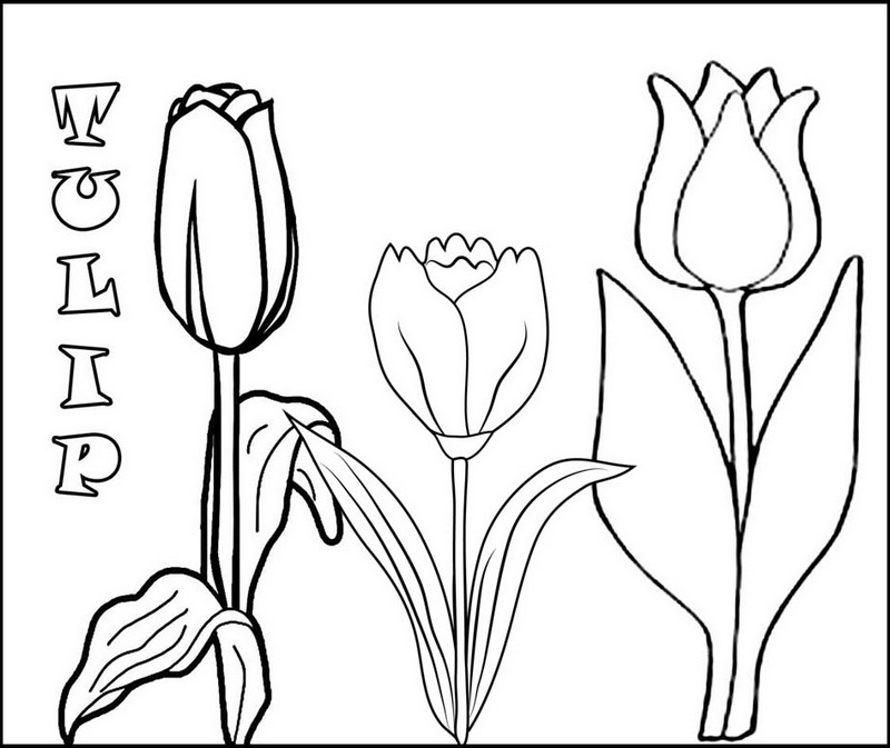 3 tulip flowers coloring pages