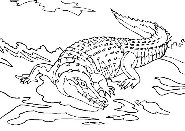 Crocodile Coloring Sheet Printable