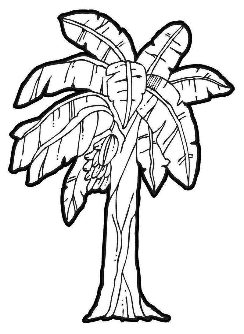 banana tree coloring page printable