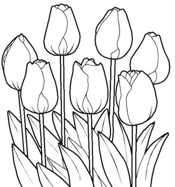 coloring pages of tulip flower