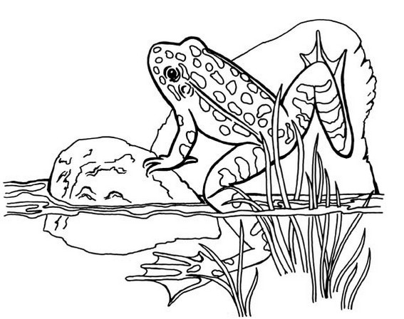 realistic frog coloring sheet printable