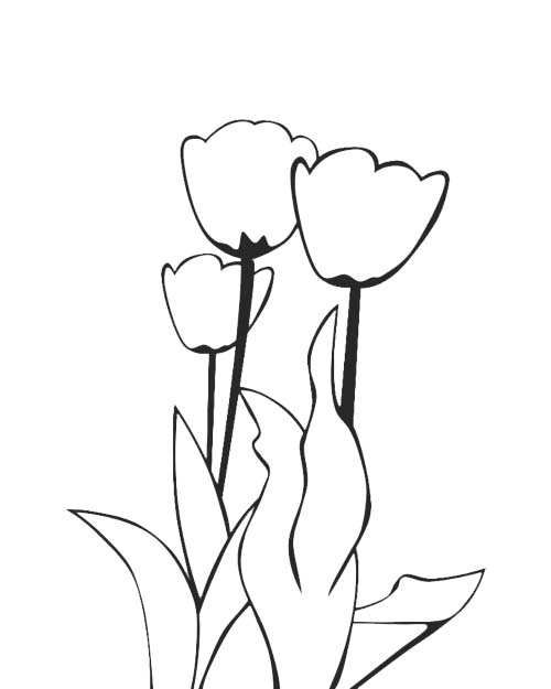 tulip plant coloring page