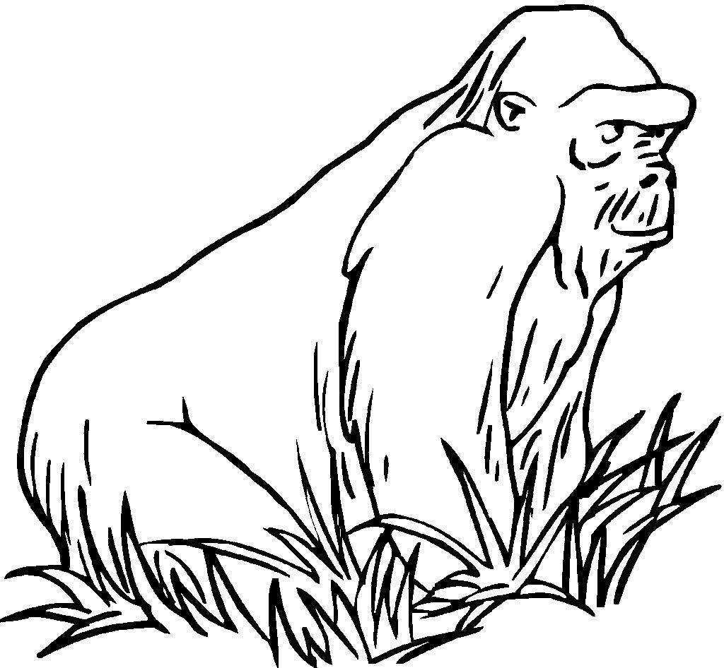 old gorilla coloring and drawing sheet