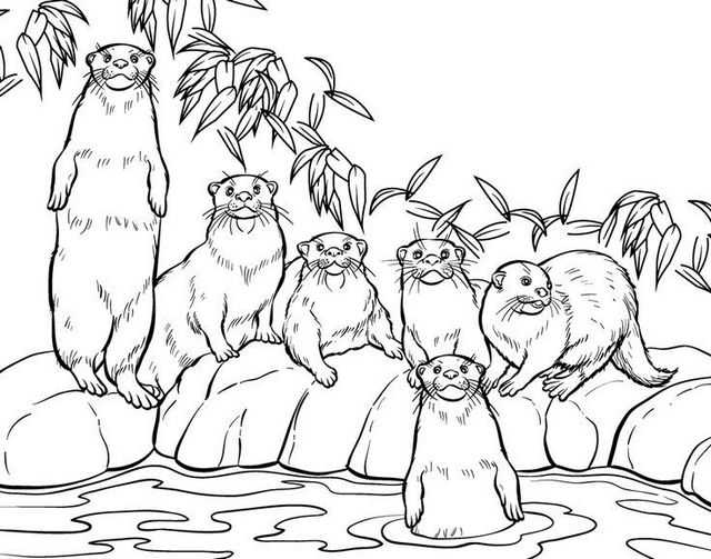 otters habitat coloring pictures