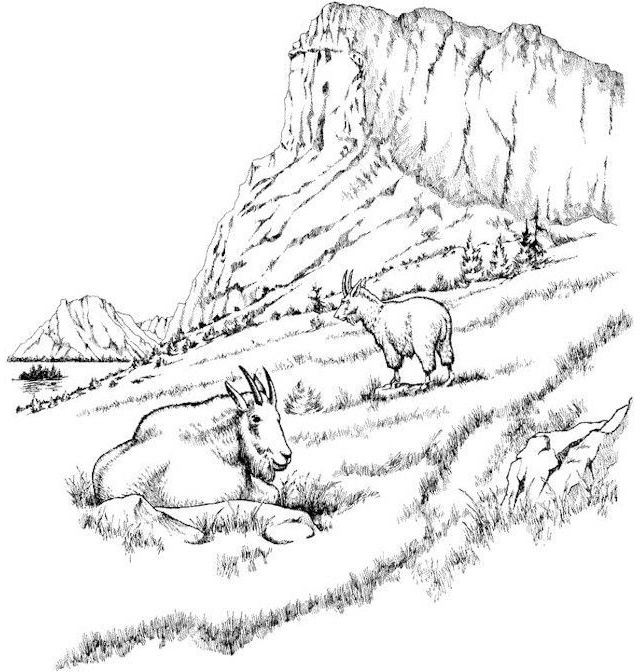 realistic mountains and goat coloring page