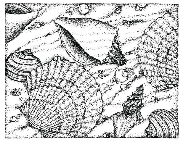 realistic various seashell coloring sheet