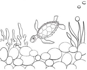 Beautiful sea turtle coloring craft idea