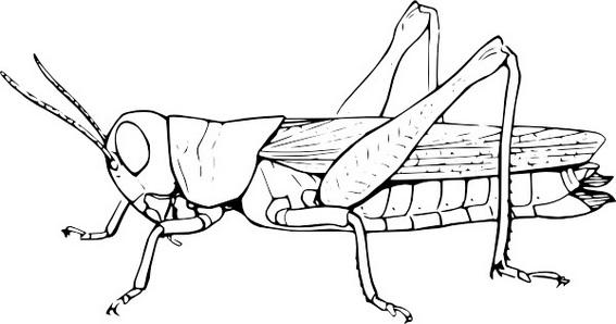 fun grasshoper coloring and drawing sheet
