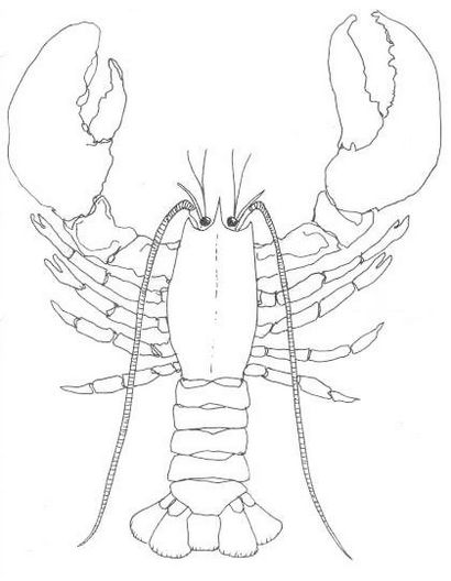 fun lobster coloring sheet