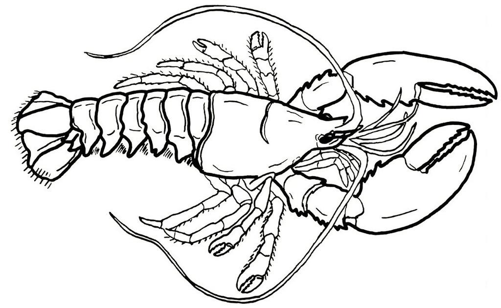giant lobster coloring sheet for little kids