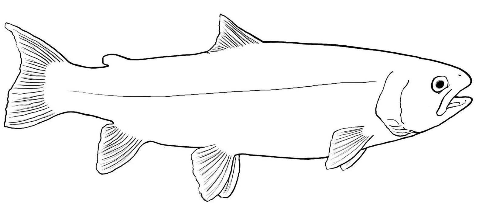 marvelous trout coloring page design
