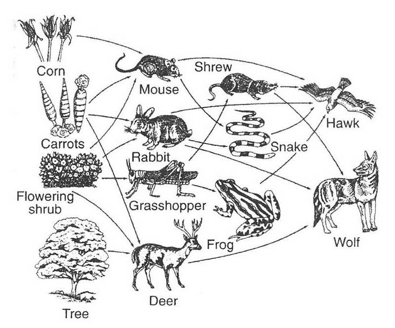 Food Chain Posters Worskheet