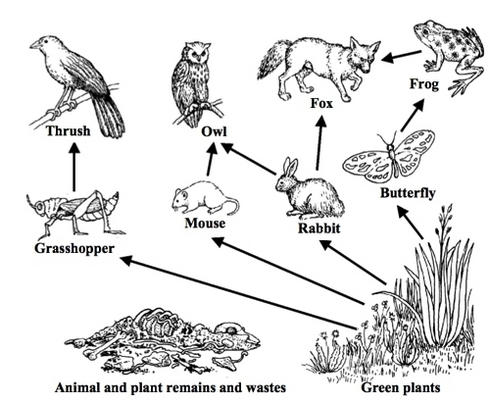 food chain coloring pages top food chain coloring page