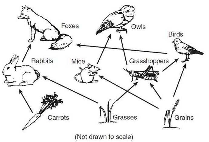 food web biology diagram coloring page