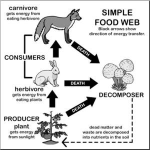 simple food web diagram coloring picture